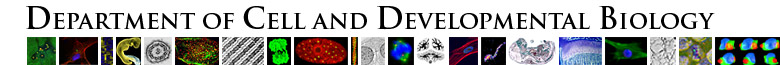 Cell and Developmental Biology Publications and Presentations